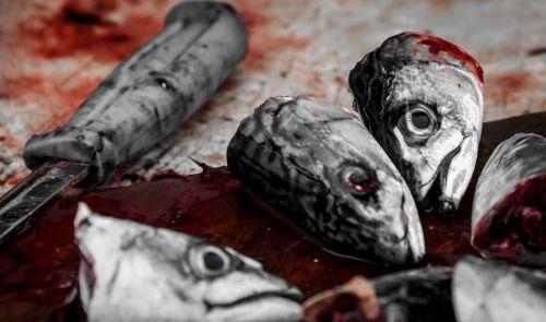 fish bloody head
