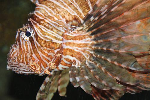 fish aqquarium meeresbewohner