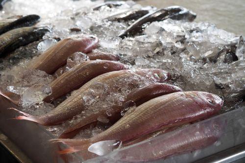 fish market fresh
