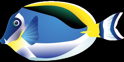 fish tropical fish sea