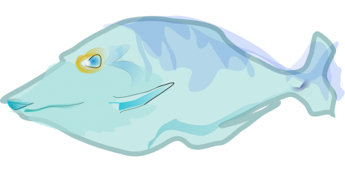 fish blue aquatic