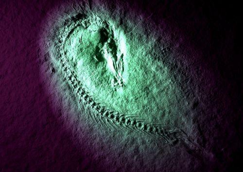 fossil fish solnhofen