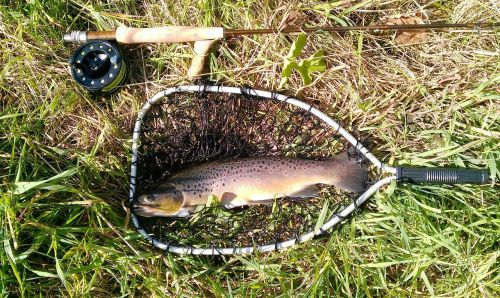 fish trout fishing rod