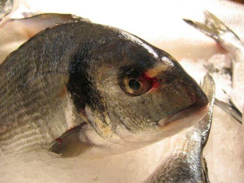 fish perch scale