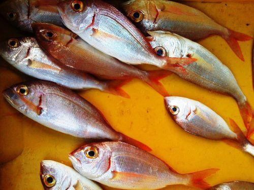 fish fish stall still life