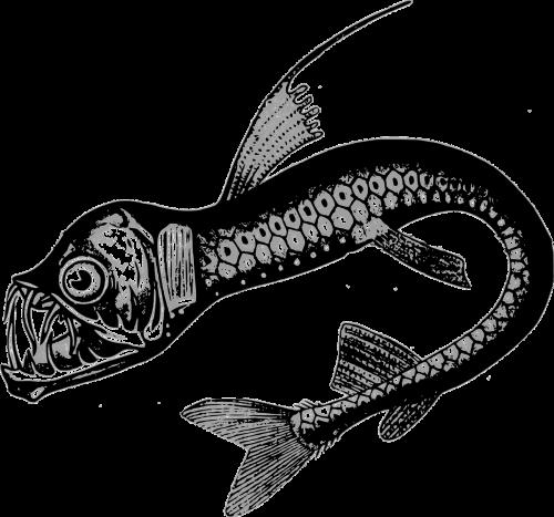fish deep sea fish sabertooth