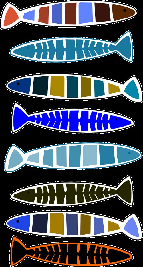 fish animals variations