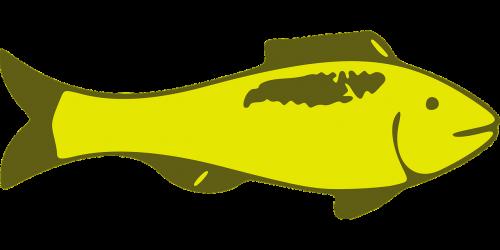 fish yellow animal