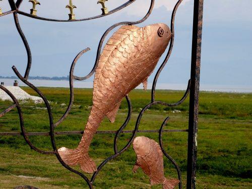 žuvis,menas,kontūras,geležis,metalas
