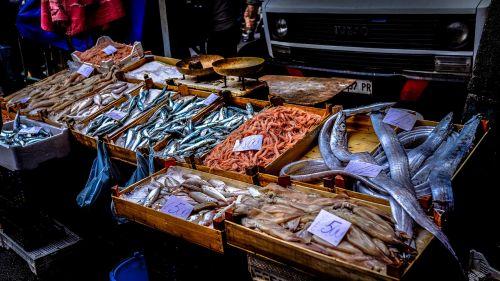 fish food market