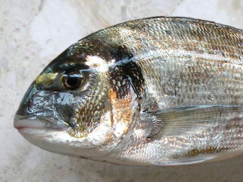 fish fishing bream