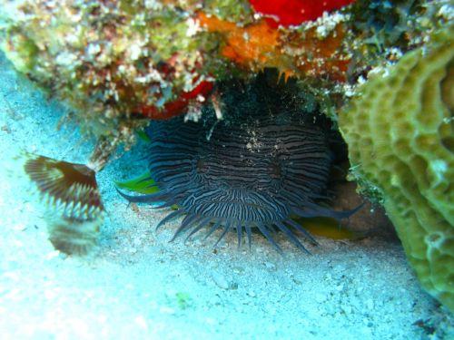fish ocean underwater