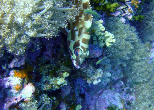 fish thailand marine diversity