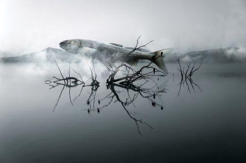 fish river wood