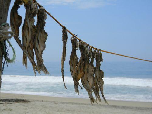fish drying sun