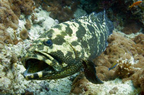 fish sea diving