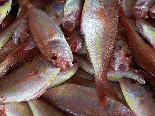 fish fischer ocean