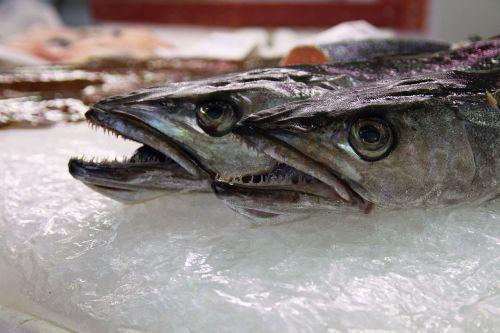 fish echoppe carnivore