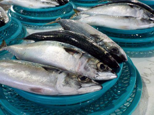 fish catch fishing