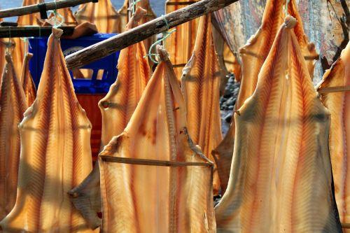 fish fishing catch fish