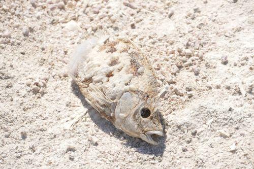 fish dead decay