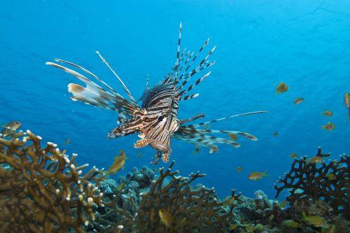 fish underwater marine life