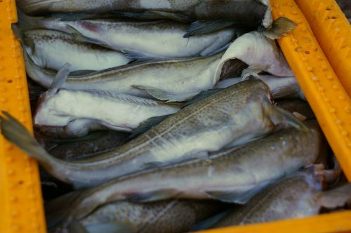 fish catch port