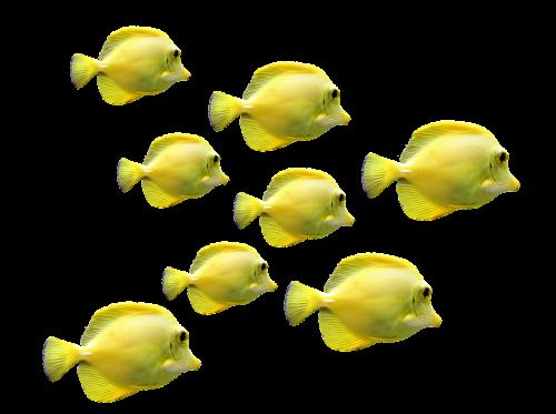 fish fish swarm underwater world