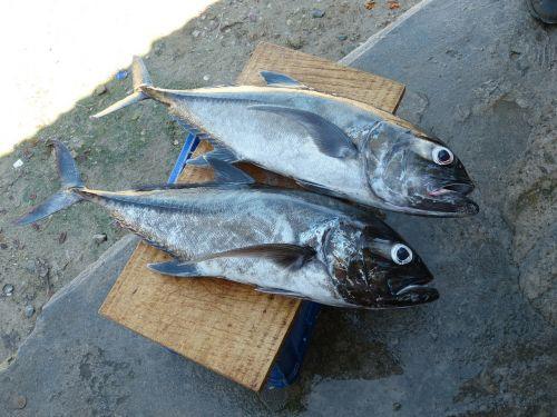 fish fischer fishing