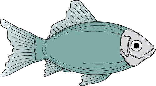 fish marine life sea life