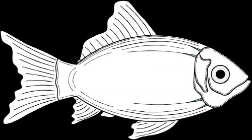 fish cod fins