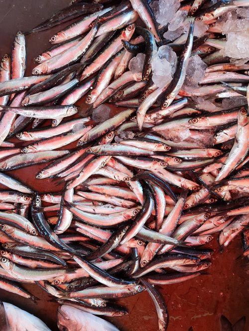 fish food seafood