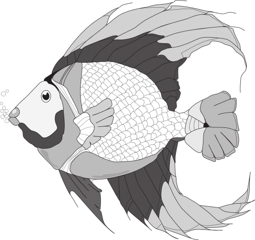fish fish illustration black and white fish