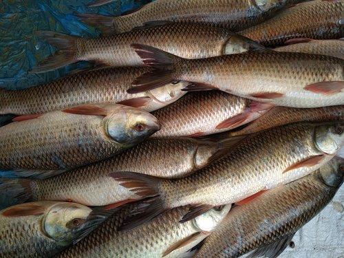 fish  catch  market