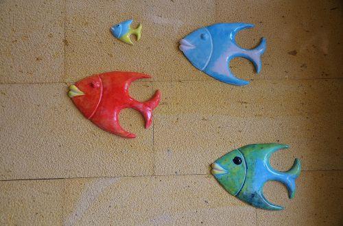 fish animal swimming