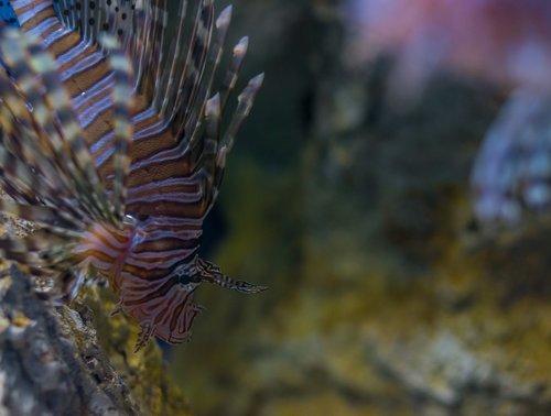 fish  fauna  nature