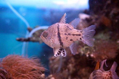 fish  tropical  sea
