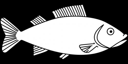 fish marine life aquatic