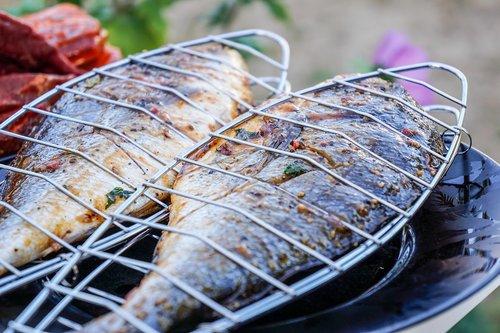 fish  sea bream  eat