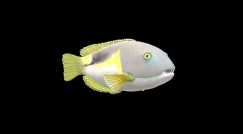 fish  maritime  meeresbewohner