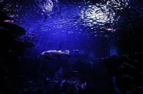 fish underwater diving