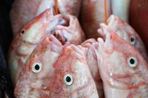 fish  eat  raw