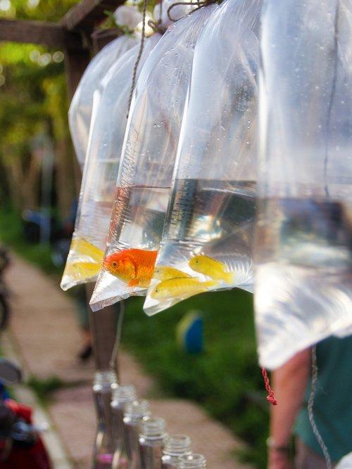 fish  street  carnival