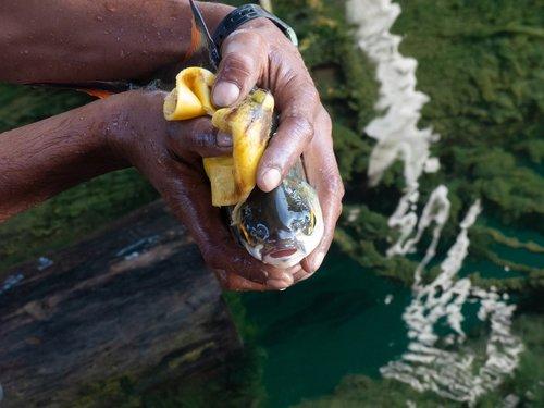 fish  fishing  fresh