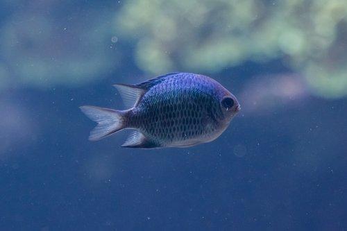 fish  aquarium  zoo