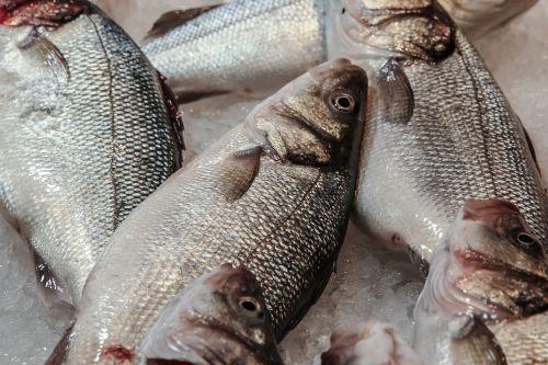 fish seafood eating