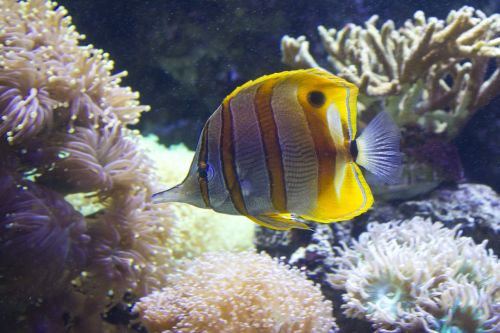 fish stripy water
