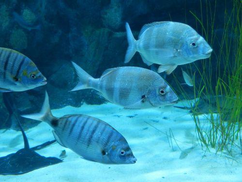 fish aquarium swim