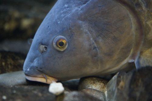 fish fish head fish eye