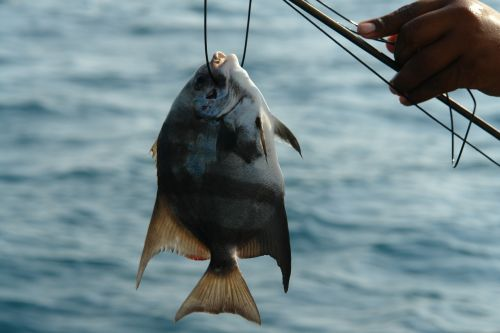 fish fishing catch